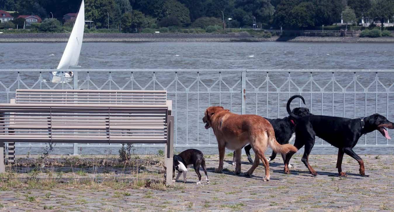 Hundeschule Hamburg – Marc Draeger