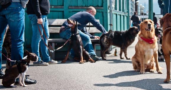 Der Hundeflüsterer bei der Arbeit mit Hundehaltern und Hunden