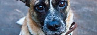 Unterricht – lernen mit Hund - Problemhundetrainer